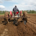 Hilling Potatoes
